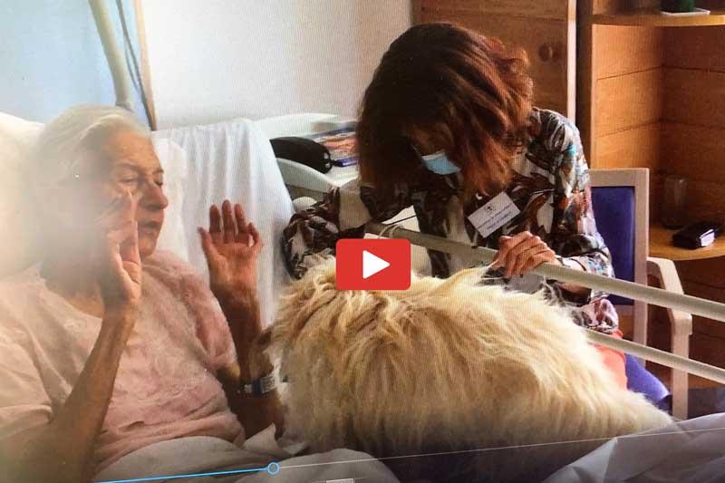 Un chien pour apaiser et créer du lien : Médiation animale en Unité de Soins Palliatifs